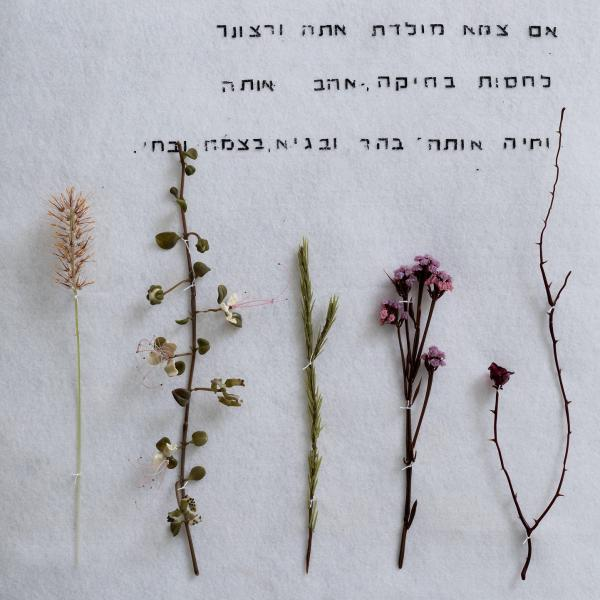 Five exquisitly flameworked glass plants and flowers are displayed on white felt. The words in Hebrew above the plants are quotes from a 1965 field guide to Israeli plants.