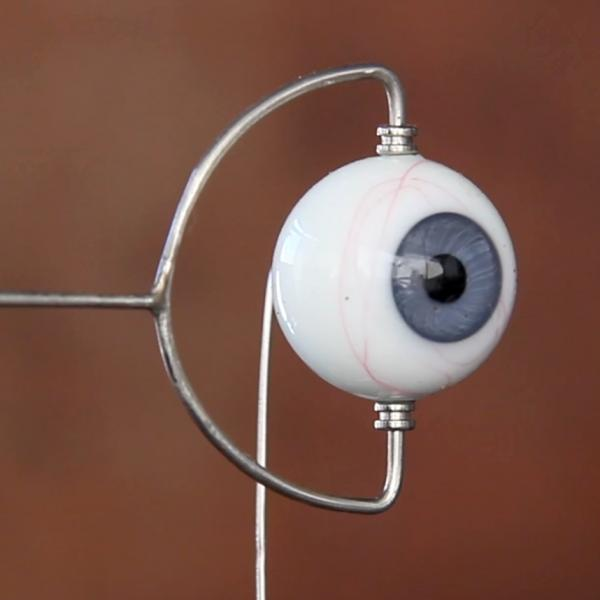 A wire frame holds a glass eyeball with a blue iris at the top and the bottom. Another wire comes out the back of the eyeball.